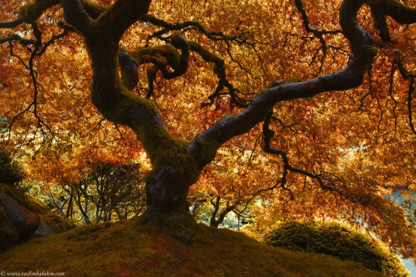 Best-Autumn-Pictures-and-Photos-07